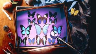 Kroměřížské muzeum představí svět denních i nočních motýlů