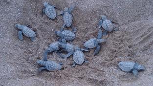 Malé želvičky.