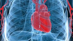 Srdce (ilustrační foto)