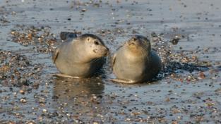 Malí tuleni (ilustrační fotografie)
