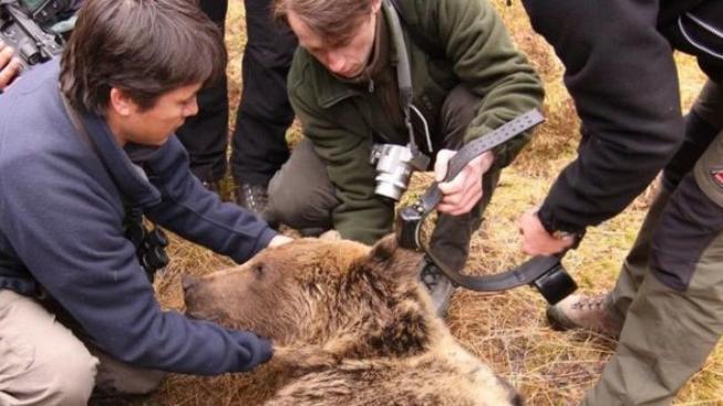 Medvěd, Vysoké Tatry
