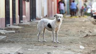 Toulavý pes (ilustrační foto)