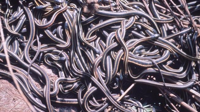 Hadi (ilustrační foto)