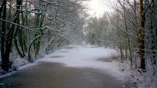 Sníh (ilustrační foto)