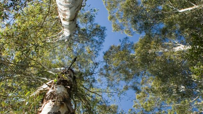 les, ilustrační foto.