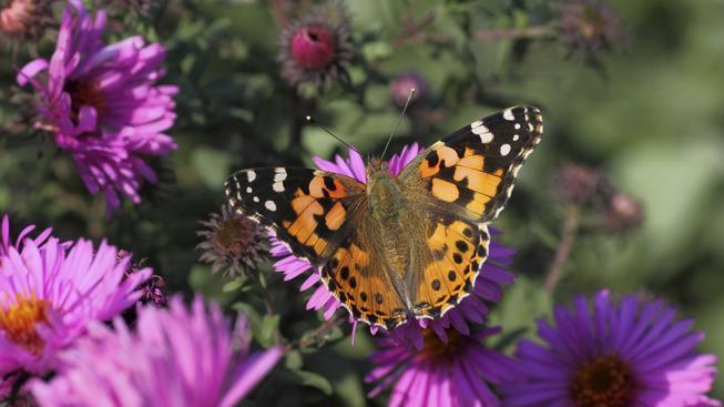 Motýl (ilustrační fotografie)