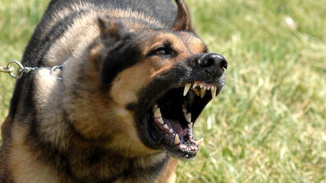 Vzteklina (ilustrační foto)