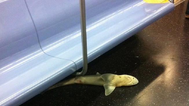 Mrtvý žralok v metru