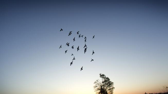 Pozorování ptáků (ilustrační fotografie)