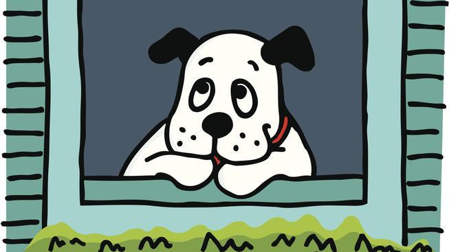 Osamělý pes