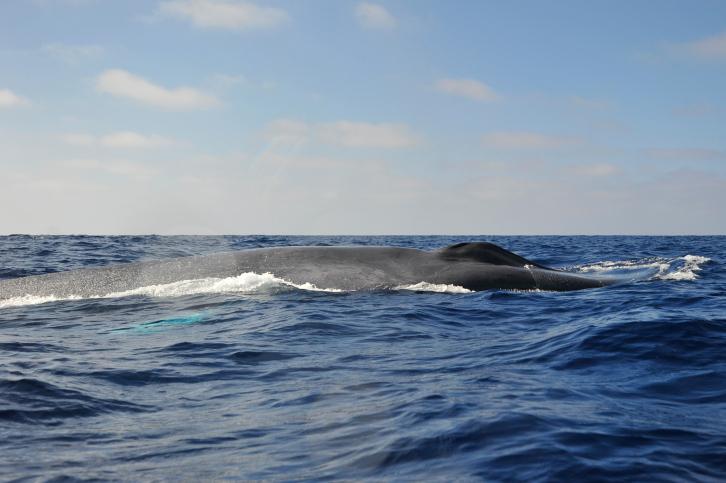 Velryby to mají na slunci jako lidé - také se mohou spálit