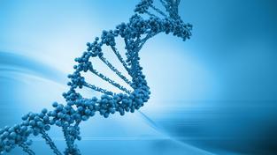 DNA (ilustrační fotografie)