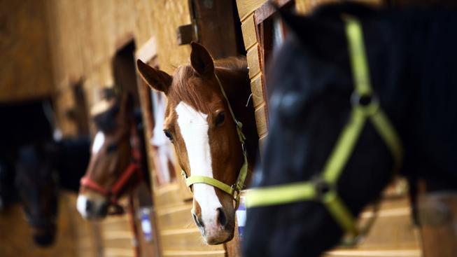 Kůň (ilustrační foto)