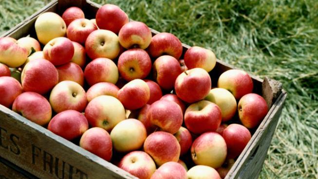 Jablka (ilustrační fotografie)