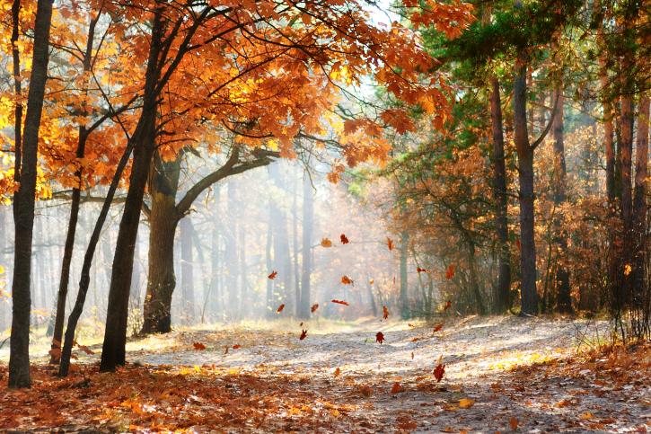 Jaké bude počasí na začátku měsíce října?