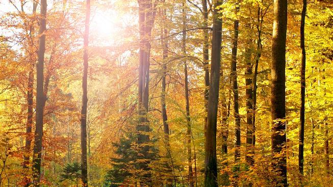 Slunečné podzimní počasí
