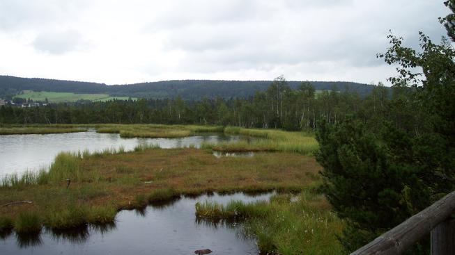 Šumava (ilustrační fotografie)