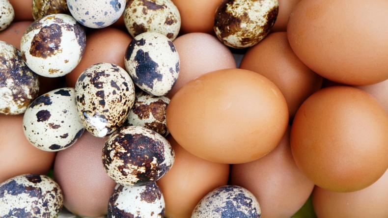 Souboj vajíček. Která z nich jsou lepší pro naše zdraví?