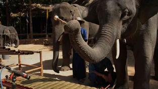 Sloní orchestr