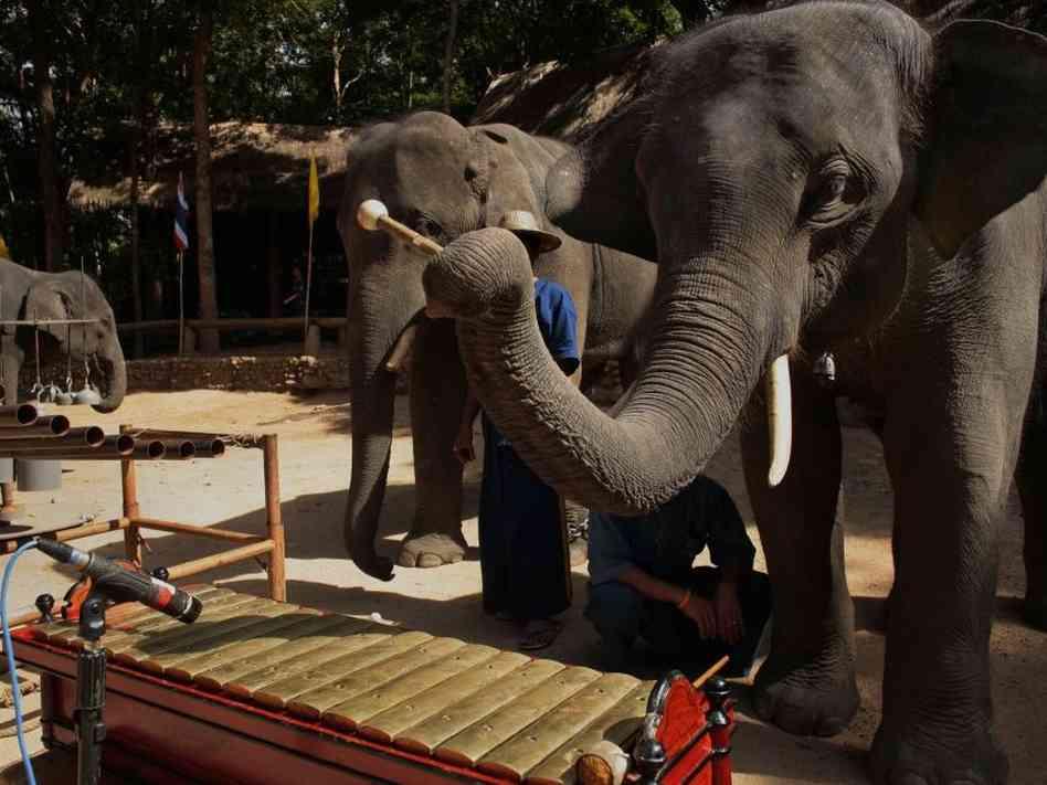 Co se stane, když dáte slonům hudební nástroje?