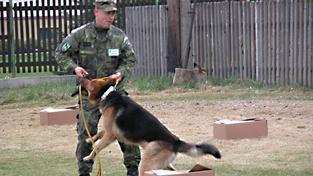 Vojenský pes