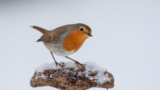 Trochu sněhu (ilustrační fotografie)