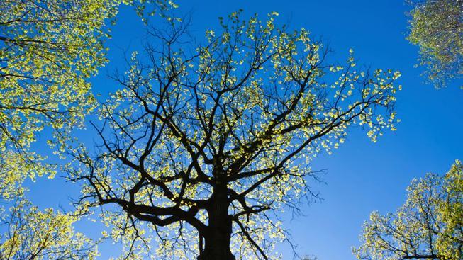 Teplé jarní počasí (ilustrační fotografie)