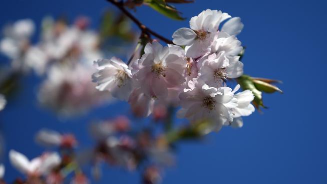 Jaro v plném rozkvětu