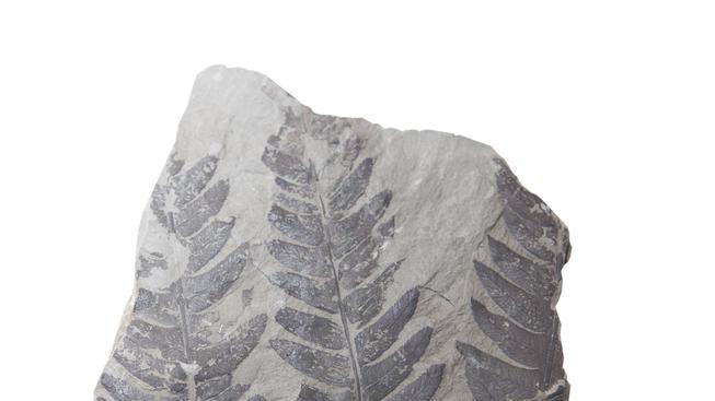 Fosilie (ilustrační fotografii)