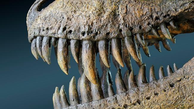 Tyrannosaurus rex (ilustrační foto)