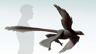 ilustrace čtyřkřídlého dinosaura