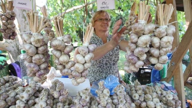 Festival česneku