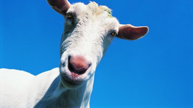 Nejlepší videoherní kozy!