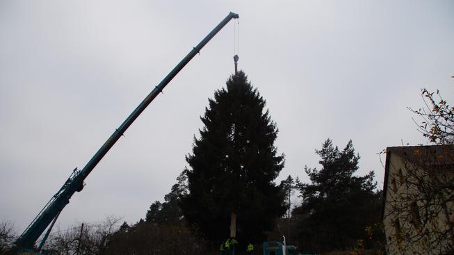 Letošní vánoční strom pro pražské Staroměstské náměstí pokáceli v Nespekách na Benešovsku