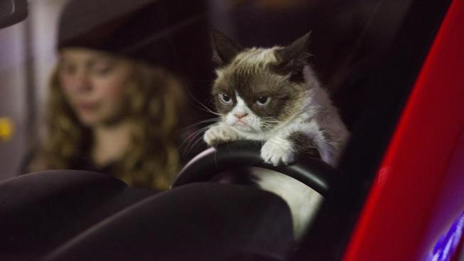 Záběr z filmu Grumpy Cat's Worst Christmas Ever
