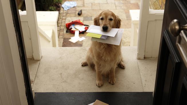I takový roztomilý pošťák může přinést nebezepčný otrávený dopis (ilustrační foto).