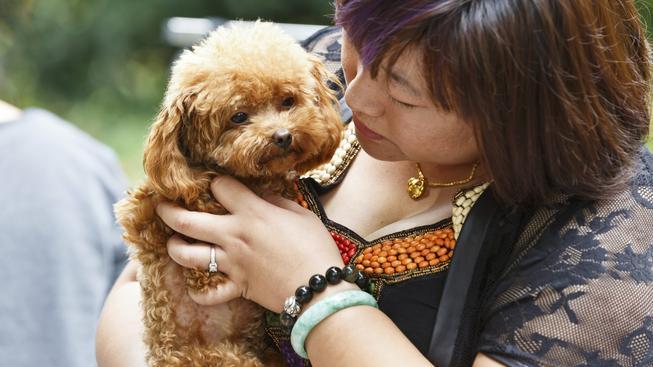 Někteří čínští psi si žijí v přepychu. Ilustrační foto