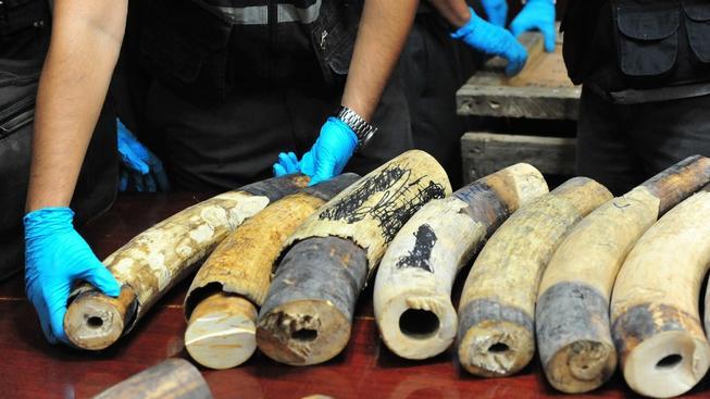 Zásilka obsahovala asi 130 sloních klů v hodnotě deset milionů bátů (zhruba 7,25 milionu Kč)