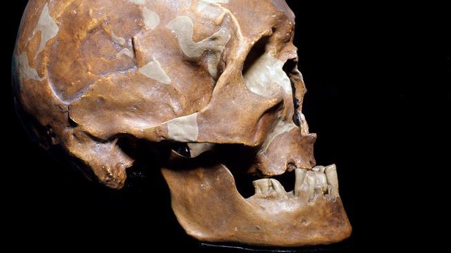 Lebka kromaňonce, předchůdce moderního typu člověka. Ilustrační foto