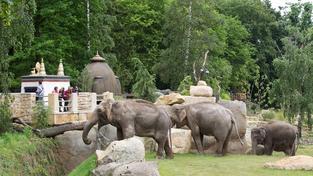 Pražskou zoo zvolil cestovatelský server TripAdvisor 4. nejlepší na světě