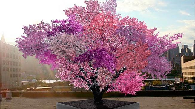 Strom 40 ovocí skutečně plodí 40 druhů peckovin
