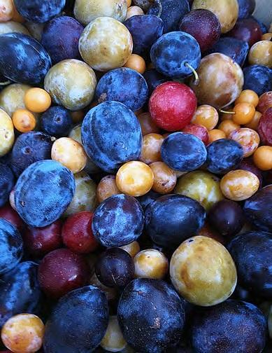 Strom 40 ovocí
