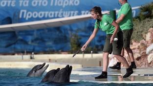 Finanční krize tvrdě dopadá i na delfíny. Ilustrační foto