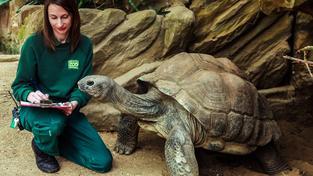 Některé druhy želv se mohou dožít stovky let. Ilustrační foto