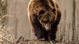 Ochranu si podle Watertona zaslouží všechna zvířata, tedy i predátoři