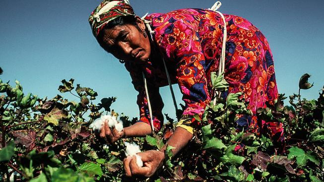 Uzbecká sběračka bavlny