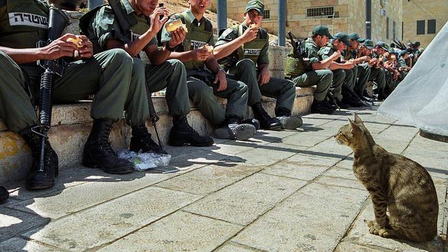 Izraelské kočky můžou být zatím v klidu, návrh na deportaci se s úspěchem nesetkal