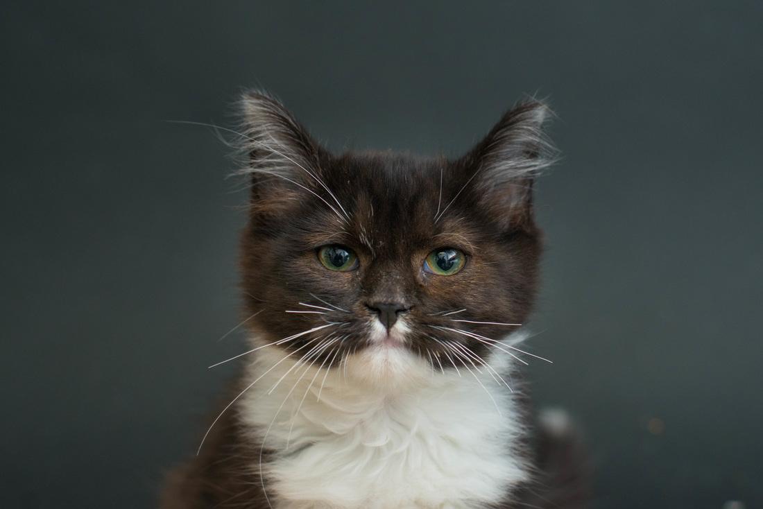 Projekt Black cats se snaží pomoct najít černým kočkám nový domov