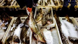 Když jde o kvóty na makrely, tak se obyvatelé Faerských ostrovů neznají