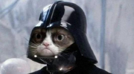 Kočky bojují proti teroristům